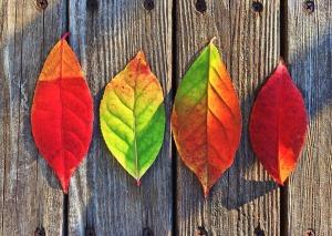 Leaves - Time to Begin - Nostalgia Diaries