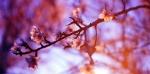 resurrecting-life-nostalgia-diaries